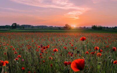 Als een bloem niet bloeit, is het niet de schuld van de bloem